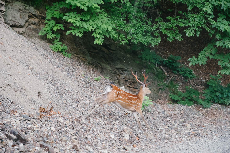 ロングダートフルマラソン。走って走って走りまくるUnseen Road【栗原川林道】